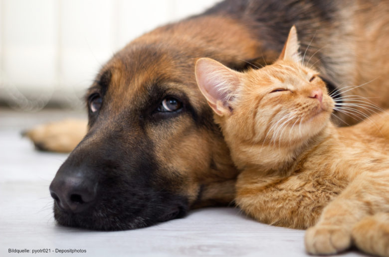 Smarte Gadgets für Haustiere